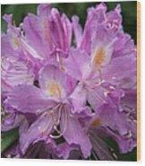 Violet Pleasure Wood Print