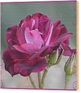 Violet Red Rose Wood Print