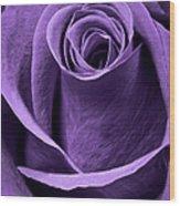Violet Rose Wood Print by Adam Romanowicz