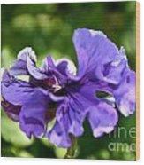 Violet Ruffles Wood Print