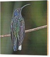 Violet Saberwing Wood Print