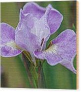 Violet Siberian Iris Wood Print