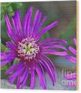 Violet Spring Iv Wood Print