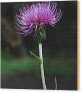 Violet Thistle Wood Print