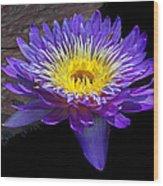 Violet Waterlily Wood Print