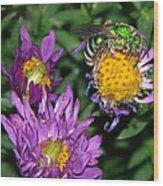 Virescent Metallic Green Bee Wood Print
