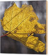 Virgin Gold - Featured 3 Wood Print