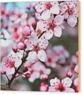Virginia Cherry Blossom Wood Print