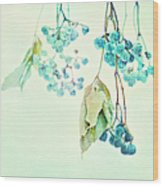 Virginia Creeper Berries Wood Print by Theresa Tahara