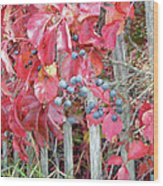 Virginia Creeper Fall Leaves And Berries Wood Print
