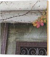 Virginia Creeper In Fall Colors Wood Print
