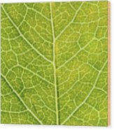 Virginia Creeper Leaf Wood Print