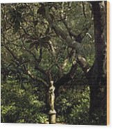 Virginia Dare Statue Wood Print
