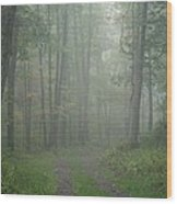 Virginia - Shenandoah National Park - Road Not Taken Wood Print