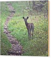 Virginia - Shenandoah National Park - White Tailed Deer Wood Print