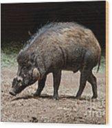 Visayan Warty Pig Wood Print