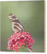 Visitor In The Garden Wood Print