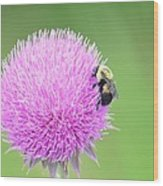 Visitor On Thistle Wood Print