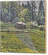 Visitors On Daffodil Hill Wood Print