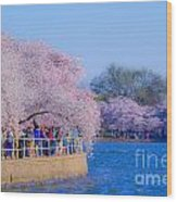 Visitors To The Blooms On The Basin Wood Print