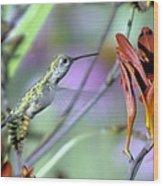 Vitality Of A Hummingbird Wood Print