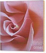 Vivacious Pink Rose 2 Wood Print