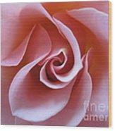 Vivacious Pink Rose 3 Wood Print