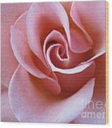 Vivacious Pink Rose 4 Wood Print