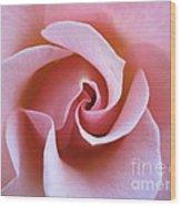 Vivacious Pink Rose 5 Wood Print