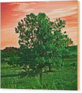 Vivid Blood Red Sky Wood Print
