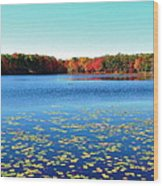 Vivid Fall Colors Wood Print