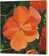 Vivid Orange Vermillion Impatiens Flower Wood Print