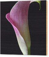 Volute Calla Wood Print