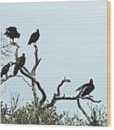 Vulture Club Wood Print