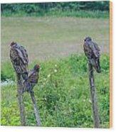 Vulture Fence Line 3 Wood Print