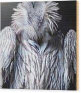 Vulture Wood Print