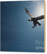 Vulture Flying In Front Of The Sun Wood Print