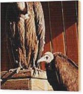 Vulture Male Wood Print