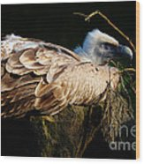 Vulture Resting In The Sun Wood Print