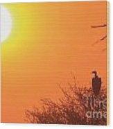 Vulture Sunset Silhouette Wood Print