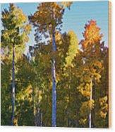 Aspens In Vertical Wood Print