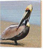 Wadding Pelican  Wood Print