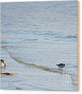 Waders Walking The Beach. Wood Print