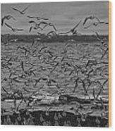 Wading Birds-black And White Wood Print