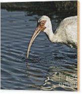 Wading Ibis Wood Print