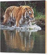 Wading Tiger Wood Print