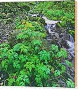 Wahkeena Falls In The Columbia River Gorge Wood Print