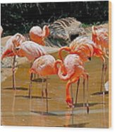 Waikiki Flamingos Wood Print