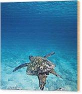 Turtle Soar Wood Print