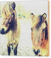 Eager Horses Waiting For Their Simple Dinner Wood Print